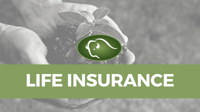 Life Insurance Financial Advisor Services